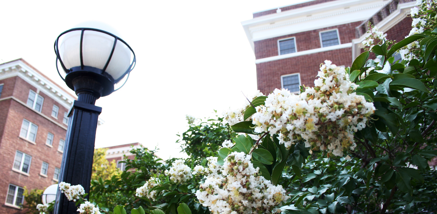 An angled view from the ground of a light pole and a Hopkins building with white flowers in the foreground.