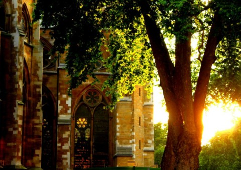 "Photo of sun setting behind gothic church and tree by ""Westminster"" by Vi Nguyen"