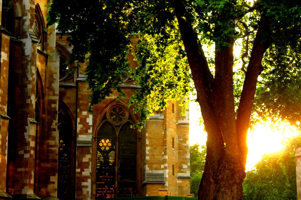 """Photo of sun setting behind gothic church and tree by """"Westminster"""" by Vi Nguyen"""