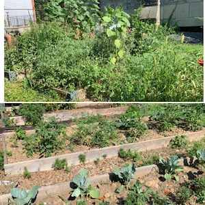 Collage of two photos of a garden